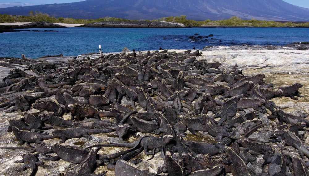 Wildlife in Galapagos