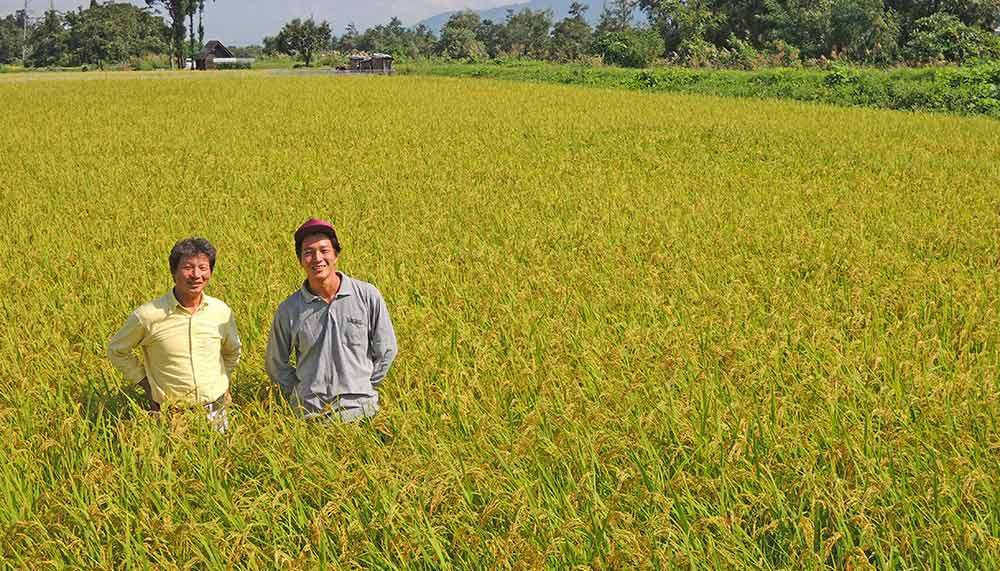 Kinmemai Premium rice