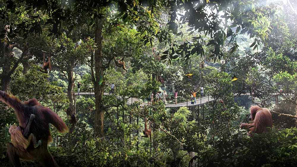 Banyan Tree X Mandai Reserve