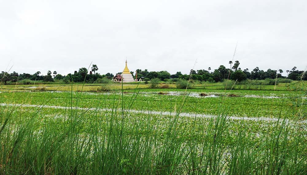 Paddy fields in Myanmar