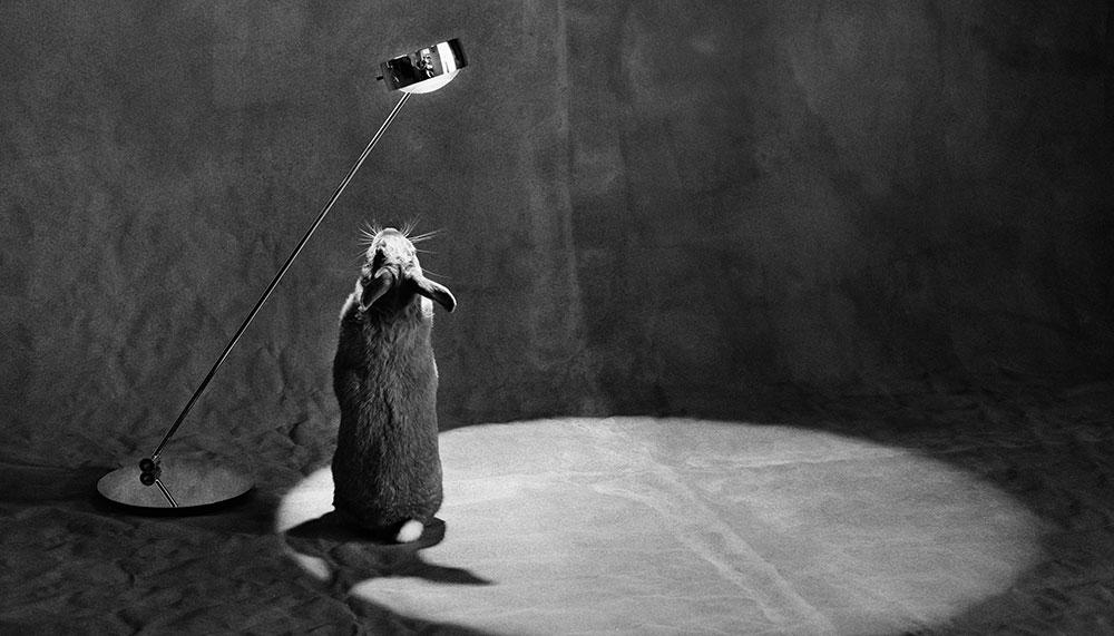 German Contemporary Excellence photo exhibition, Occhio