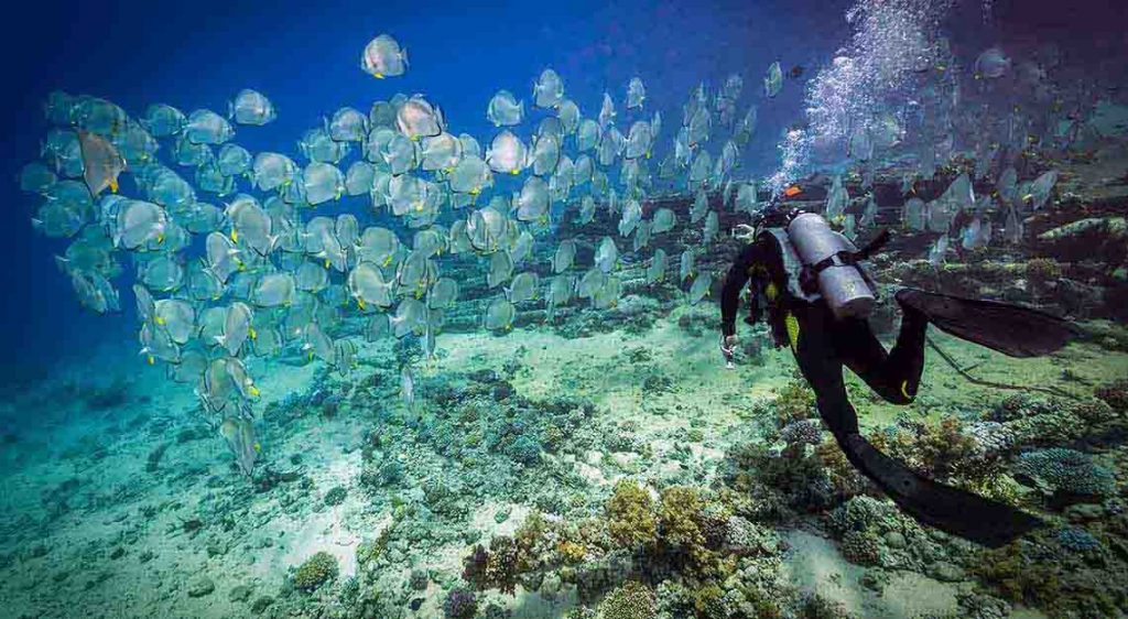 Luxury resorts in the Maldives - Como Maalifushi