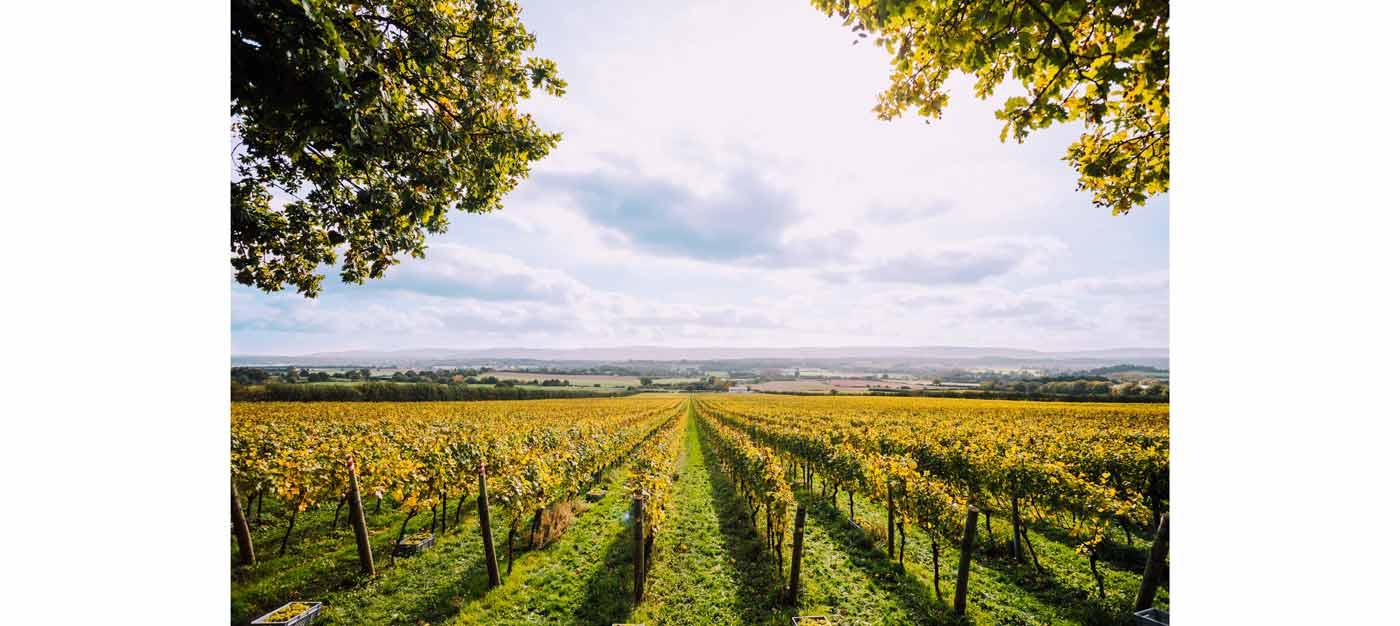 nyetimber tillington single vineyard