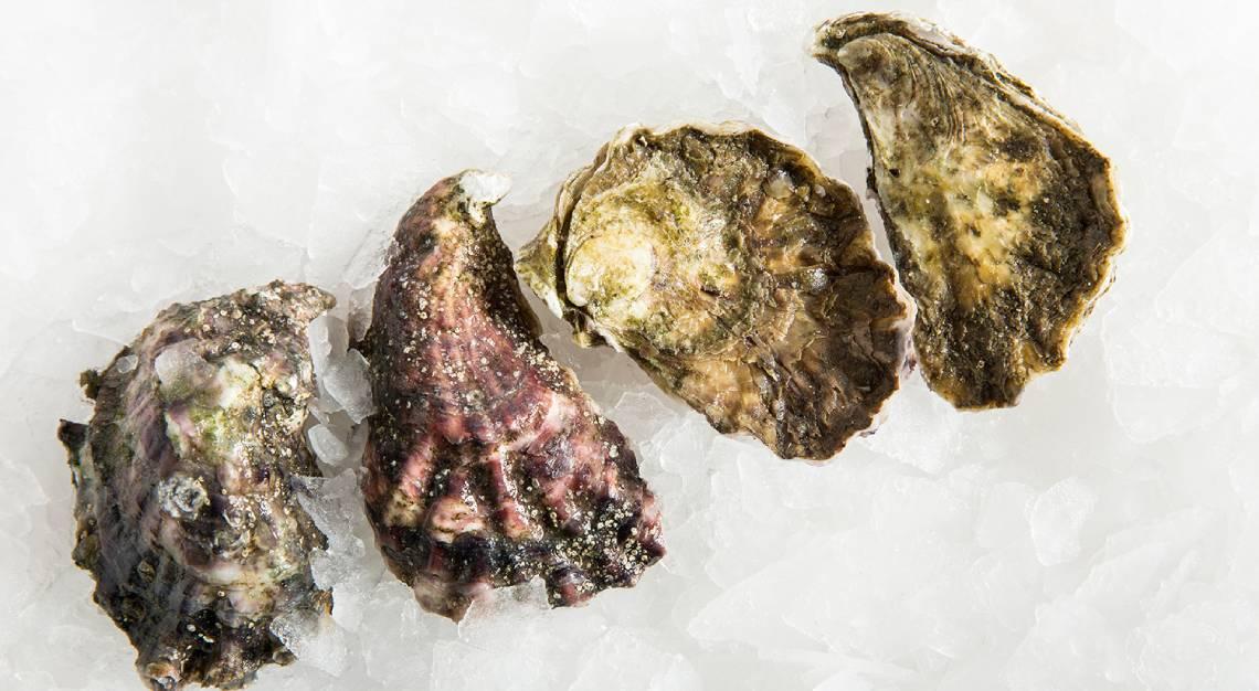 oyster sommelier