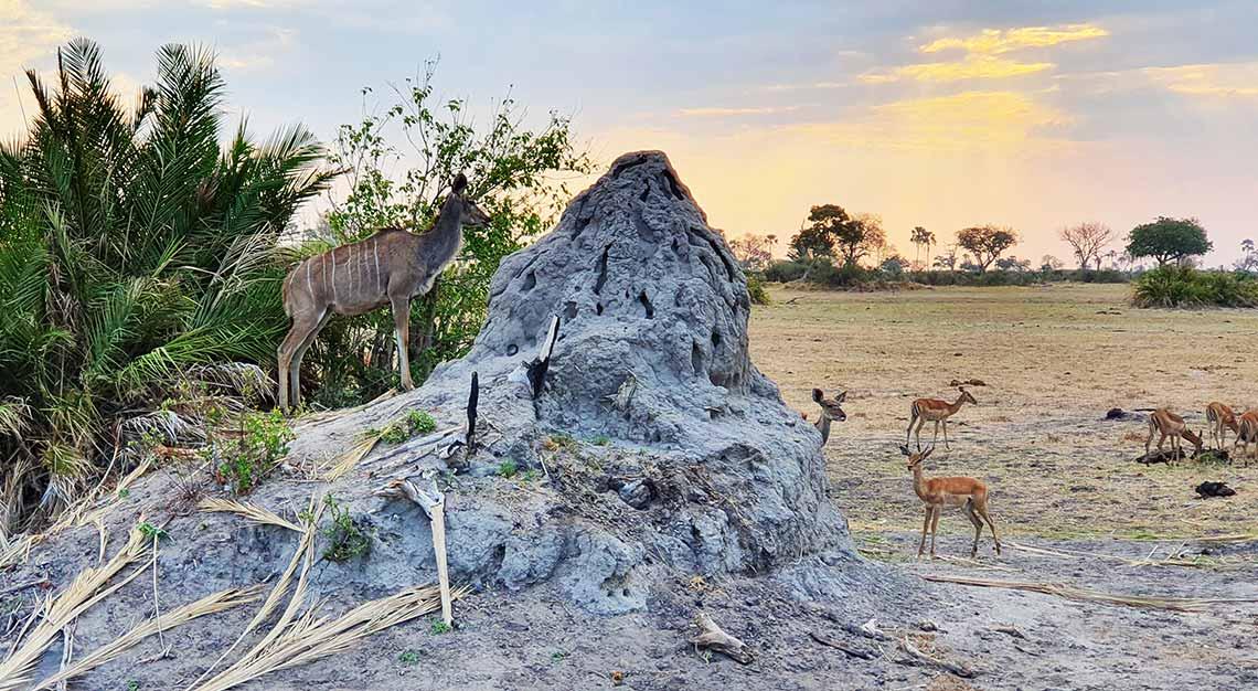 Jao Camp, Botswana, Wilderness Safaris