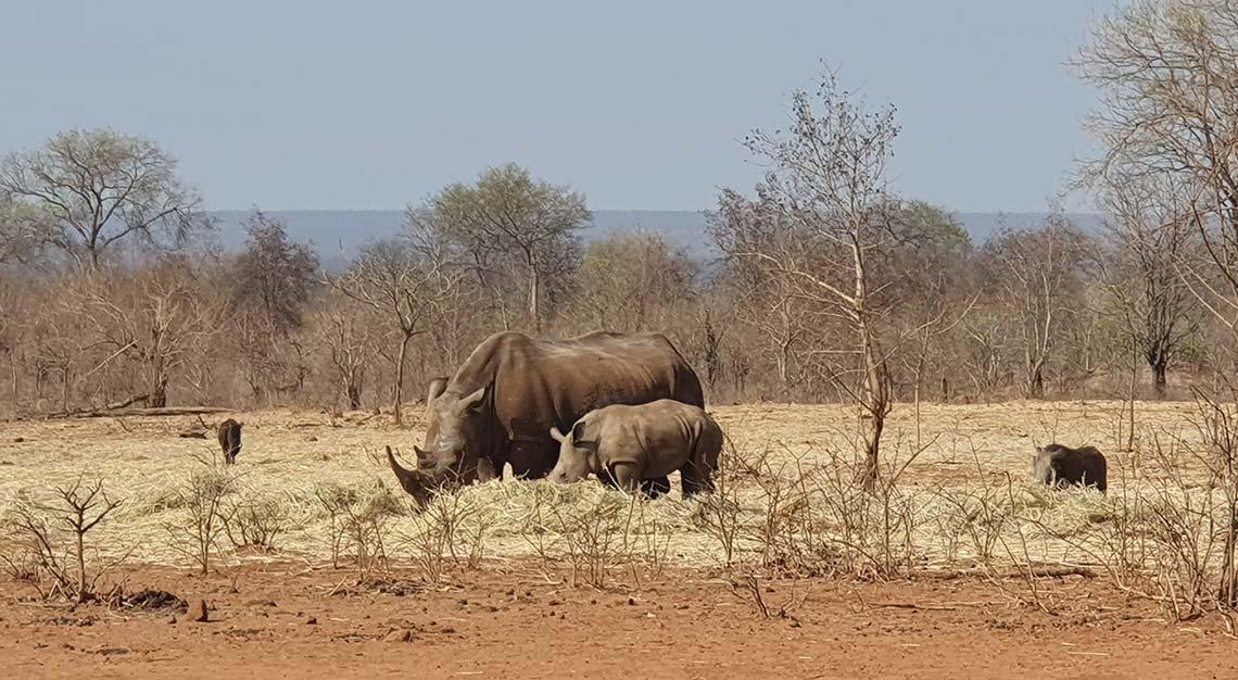 Mosi-O-Tunya National Park, Zambia