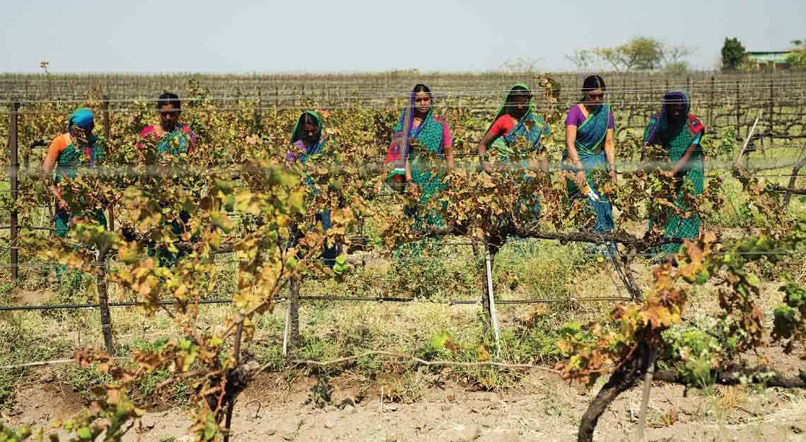 Fratelli Vineyards