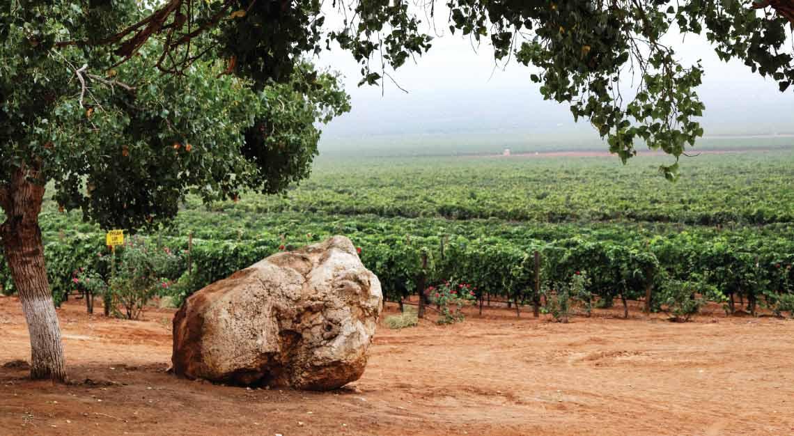 The Llano Colorado Vineyard in Mexico