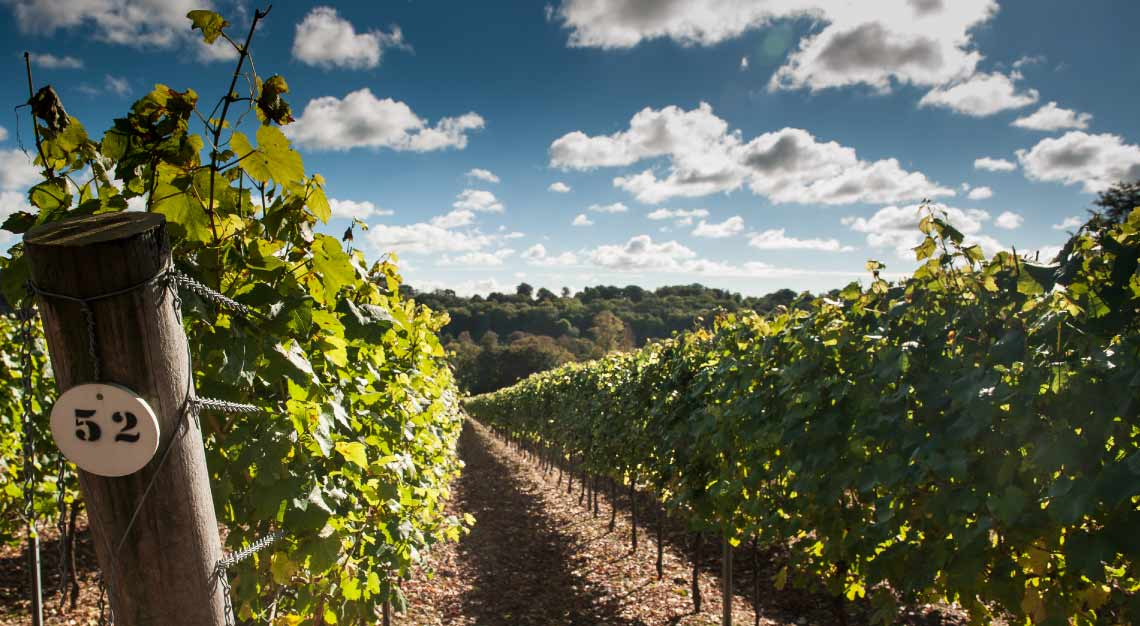 Hamphire's Hambledon Vineyard in England