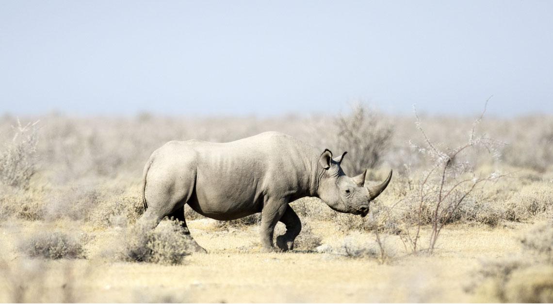 Black-Rhino_Etosha-National-Park_Namibia