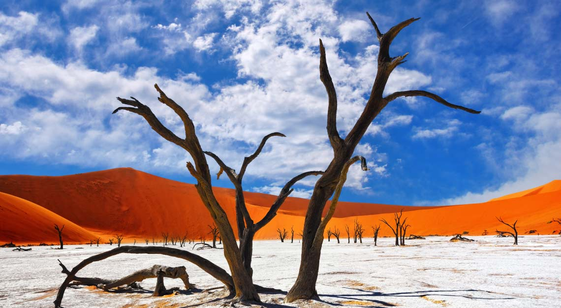 Dead-Camelthorn-Trees-in-Deadvlei