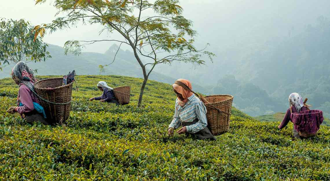 TWG Tea Darjeeling