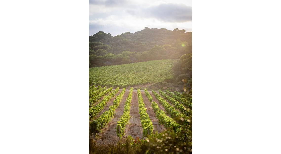 Domaine de L'Ile Porquerolles 2019 rosé