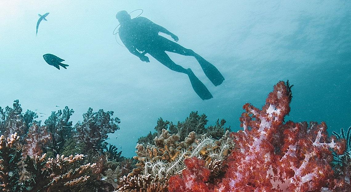 Gaya Island Resort Coral Reefs