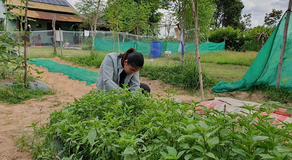 Shinta Mani Foundation Organic Farm