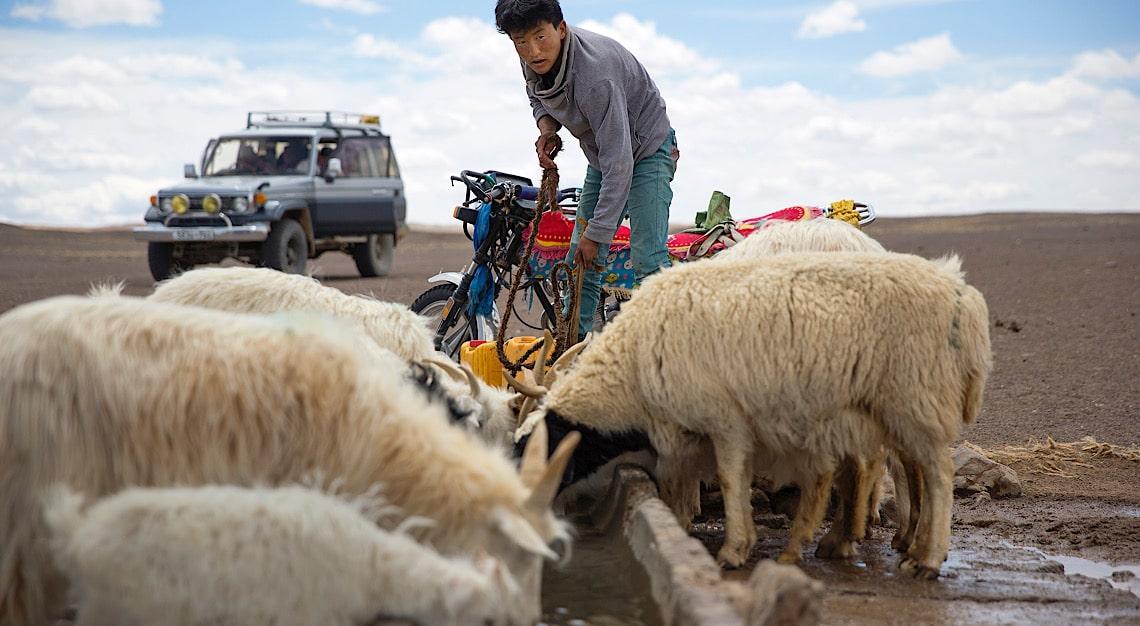 Mongolia Cashmere
